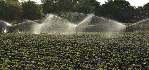 0305-produccion-alimentos