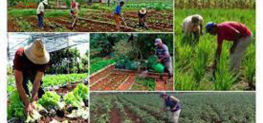 Imagen de la Agricultura